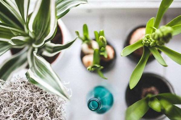 plantes déco